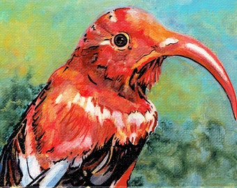 I'iwi in Waiting, 8x10 print, 'I'iwi bird, Iiwi, Hawaiian Bird, Bird Art, Endangered Bird, Hawaiian Honeycreeper, Native Species Art