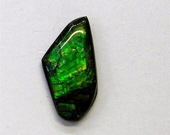 Green Canadian Ammolite Cabochon