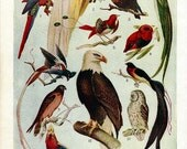 Vintage Page from Early 1900's Encyclopedia Featuring Colorful Illustrations of Birds of Prey