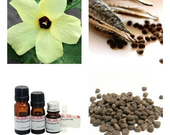 Ambrette seed absolute essential oil, Musk Ambrette seeds oil, Perfume fixative, Ambrette seed botanical musk oil, Natural musk absolute oil
