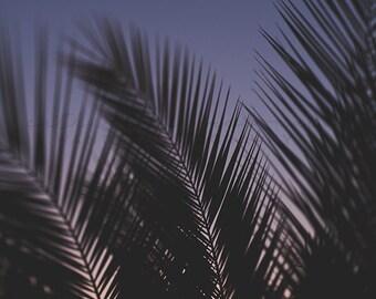 California Sunset Photography Los Angeles print palm tree frond wall art, Surf Decor, Pastel Large Print