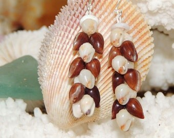 Poleho & Momi Heliconia style shell earrings/ShellsHawaii