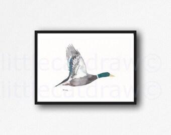 Flying Mallard Duck Art Print Watercolor Painting Duck Print Bird Art Watercolour Print Watercolour Wall Art Watercolor