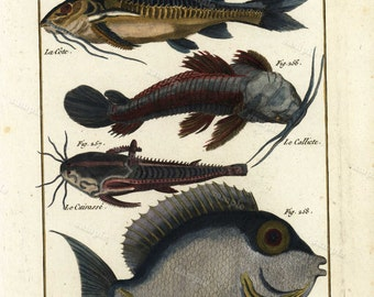 Natural History copperplate of Fish - Histoire Naturele - 1780  Hand colored ocean sealife