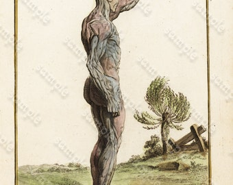 Original Hand colored engraving of  Human anatomy  From Hisotire Naturelle  1780