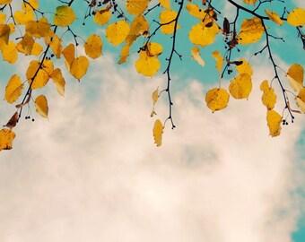 Warm Autumn  - Golden Hearts - Lucky Gold -  Wall Decor - Fall Photograph - Autumn Tree - Tree and Sky Art - Nature Photograph