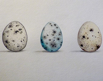 Quail Egg Watercolor