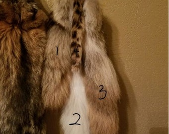 COYOTE TAIL #3
