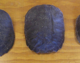 3 Snapping Turtle Shells