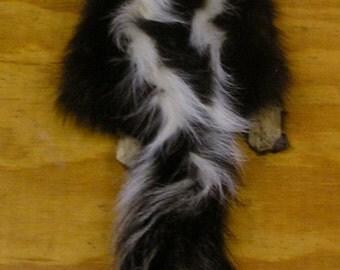 Large Wyoming Skunk Pelt for Life Size Mount