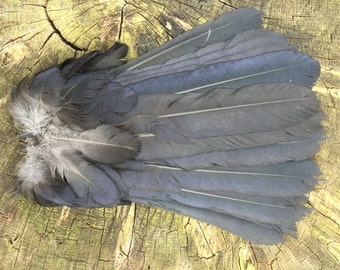 A Beautiful Fan of English Crow Feathers with a pair of Crow feet.