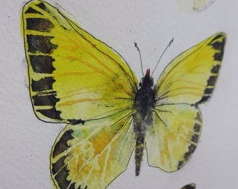 British Butterflies, yellow series, original watercolor painting