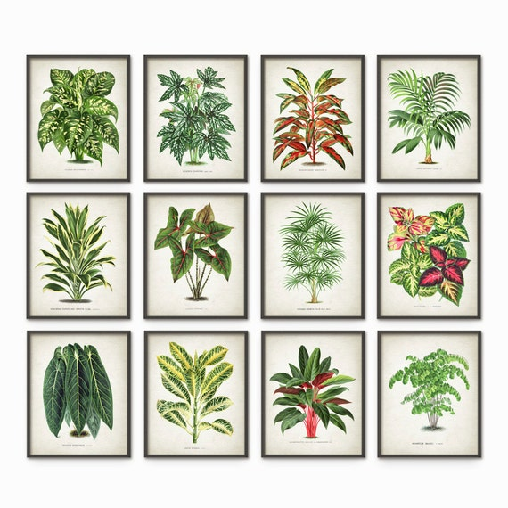 House Plant Print Set of 12 - Botanical Plant Art - Home Decor - Green Plant Book Plate Illustration - Plant Wall Art - Botanical Decor #615