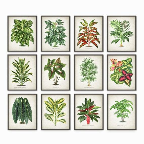 House Plant Print Set of 12 - Botanical Plant Art - Home Decor - Green Plant Book Plate Illustration - Plant Wall Art - Botanical Decor #615
