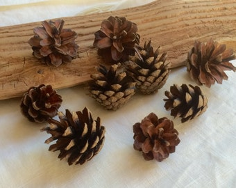 Scotch pine cones lot of 45 small 1.5 inch dry natural pinecones for crafts, rustic ornaments, wedding decor, wreaths, florist supply