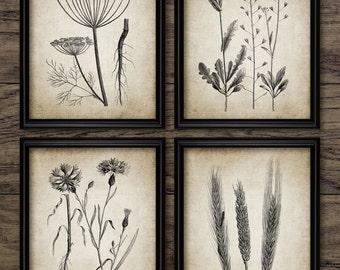 Botanical Print Set of 4 - Field Plant - Vintage Botanical Art - Plant Art - Printable Art - Set Of Four Prints #255 - INSTANT DOWNLOAD