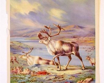 Walter Alois Weber Unframed Animal Art PrintThe Caribou Lead Their Well-Grown Children Southward 1934 Wildlife