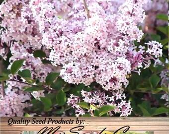 lilacs in bloom etsy. Black Bedroom Furniture Sets. Home Design Ideas