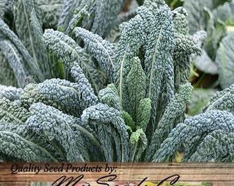 200 x Organic Lacinato Kale Seeds - aka Dinosaur kale. Very popular variety Brassica oleracea