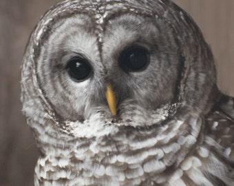 Barred Owl Photography Fine Art Print