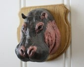 Baby Hippo! Mounted Animal Trophy Head
