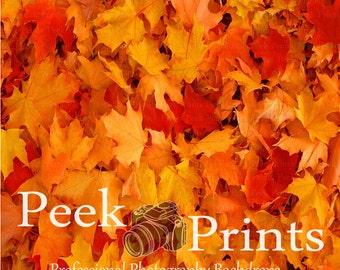 3ftx3ft Colors of Fall- Fallen Leaves Vinyl Photography Backdrop - Leaf Floor Drop- Fall Floor Drop
