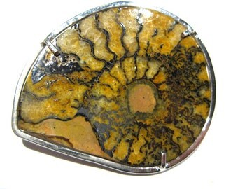 ammonite -fossil brooch
