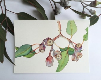 Botanical print of Eucalyptus branch - horizontal wall art print A4 - Australian native gum tree branch with gumnuts -   living room art