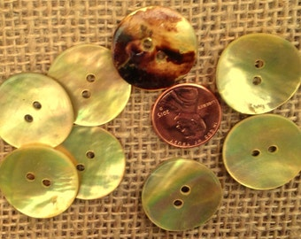 "Lot of 8 Dyed Golden Natural Shell Abalone Buttons 7/8"" 23mm # 7356"