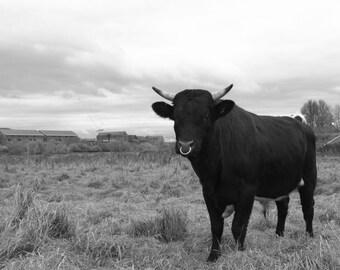Load of bull