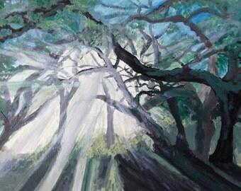Light in the Oaks