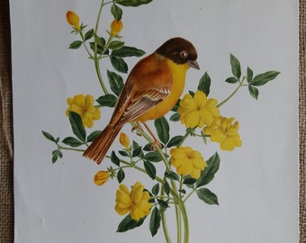 Vintage American Goldfinch Print by A Marlin