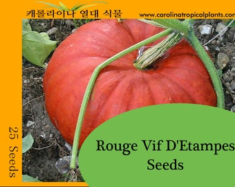 Rouge Vif D'Etampes Pumpkin Seeds - 25