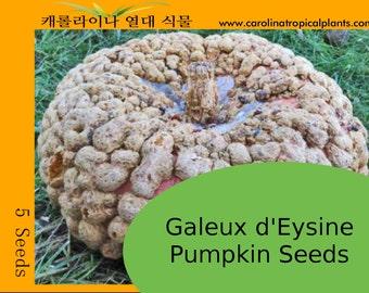 Galeux d'Esine Pumpkin Seeds - 5 Seeds
