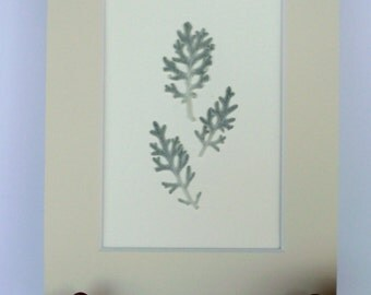 Real Pressed Leaf Botanical Art Herbarium Specimen 5x7 Dusty Miller