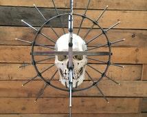 SKULL NOT INCLUDED Hanging Craniometer  Real Human Skull Display Oddities Medical Dentistry