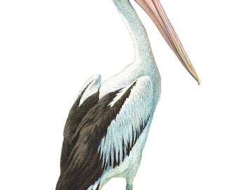 Pelican, bird print, bird prints, Australian pelican