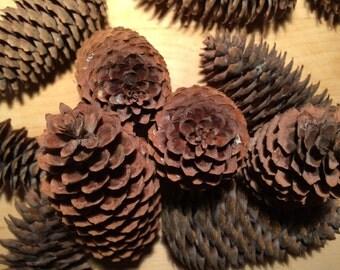 Spruce Cones, Natural Large Spruce Cones, Bulk Spruce Cones, Natural Wreath Supplies, Spruce Cones  for Home Decor