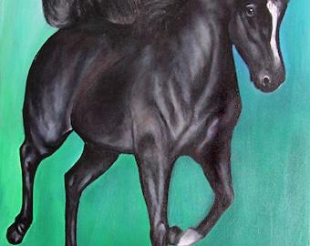 Little black pony