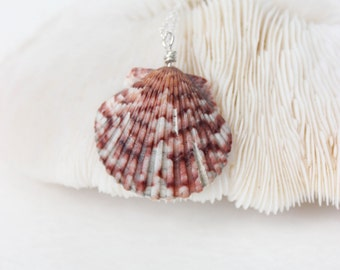 Calico Seashell Necklace - Scallop Shell Necklace - Seashell Necklace - Scallop Necklace  - Gift For Her - Seashell Jewelry