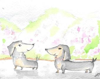 Two dachshunds enjoying a walk