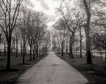 Chicago Photography, Grant Park, Landscape Photography, Black and White Photography, Chicago Print, Fine Art Photography - Chicago Park