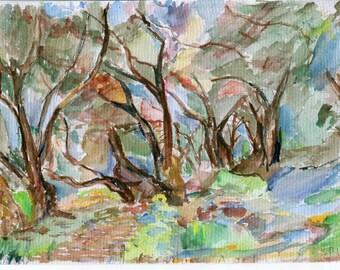 Olive grove no1
