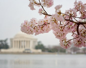 Nation's Capitol In Spring