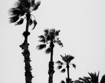 Barcelona Palm Trees in Black and White