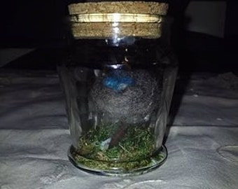 Birdnest in Jar