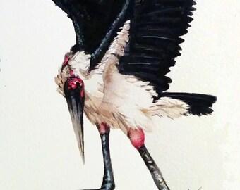Maribou - Giclée print on archival Rag - Watercolor - Maribou Stork