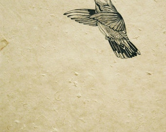 Hummingbird Mounted Print