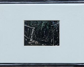 Cedar Thicket, Primrose Park - Shelburn ON