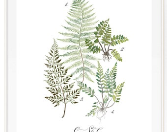 Fern Study Vol.1 - Botanical Scientific illustration. Beautifully textured cotton canvas art print. Order as a 5x7 8x10 11x14 or 16x20 size.